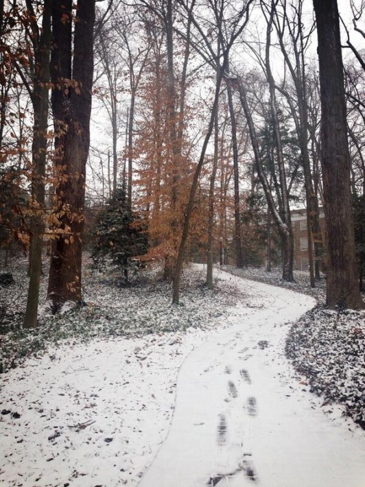 snowy path through trees in woods