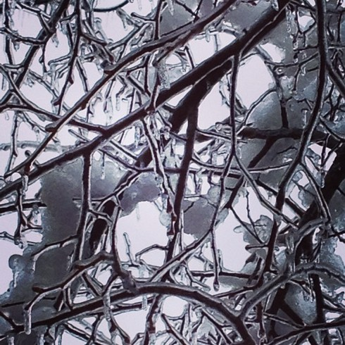 close up of ice on a treet