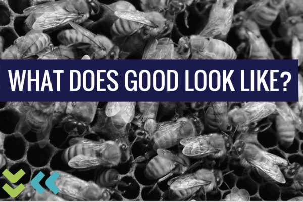 "bees scrambling over honeycomb with the words ""what does good look like?"" laid over the image"
